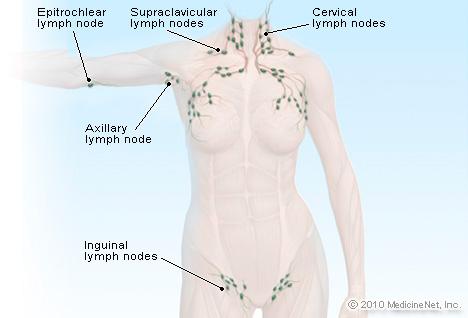 surface-lymphatics.jpg